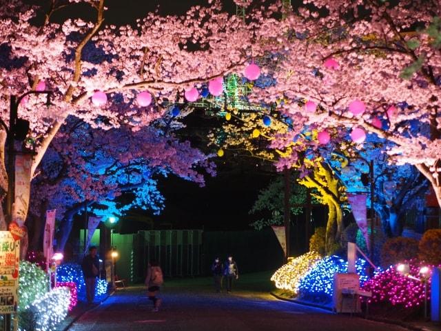 宮城県 桜まつり 2018